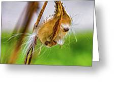 Autumn Milkweed 9 Greeting Card