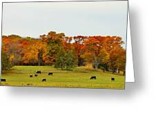 Autumn Minnesota Black Angus Cattle Greeting Card