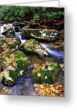 Autumn Monongahela National Forest Greeting Card