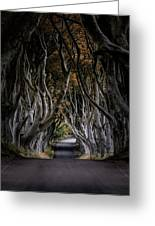Autumn Morning At Dark Hedges Alley  Greeting Card
