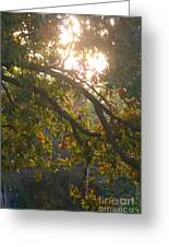 Autumn Morning Glow Greeting Card