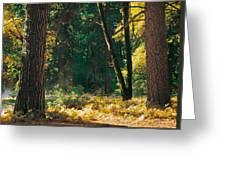 Autumn Morning Yosemite National Park Greeting Card