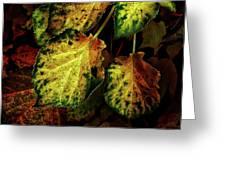 Autumn Motif Greeting Card