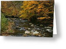 Autumn Mountain Stream Greeting Card