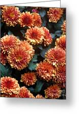 Autumn Mums - A Group Portrait Greeting Card