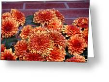Autumn Mums - Against Brick Greeting Card