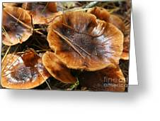 Autumn Mushrooms Greeting Card