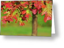 Autumn Oak Tree Greeting Card