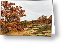 Autumn Oaks 3 Greeting Card