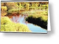 Autumn On A Pennsylvania Mountain Stream Greeting Card