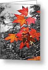 Autumn On Black And White Greeting Card