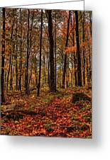 Autumn On The Ice Age Trail Greeting Card
