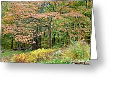 Autumn Paints A Dogwood And Ferns Greeting Card