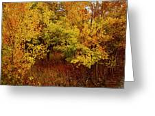 Autumn Palette Greeting Card by Carol Cavalaris