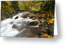 Autumn Passages Greeting Card