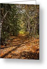 Autumn Path In Spearfish Canyon Greeting Card