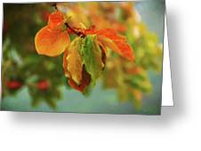 Autumn Persimmon Leaves Greeting Card