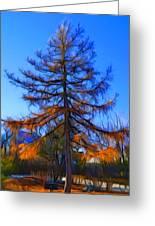 Autumn Pine Tree Greeting Card