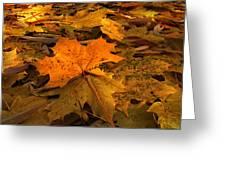 Autumn Quilt Greeting Card
