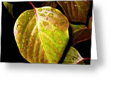 Autumn Rain Greeting Card