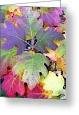 Autumn Rainbows Greeting Card