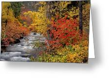 Autumn Rapids Greeting Card