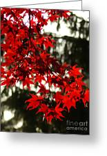 Autumn Red Greeting Card by Jeff Breiman