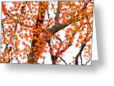 Autumn Red Leaves On A Tree   Greeting Card