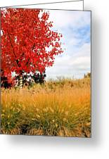 Autumn Red Maple Greeting Card