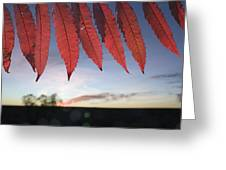 Autumn Red Sumac Leaves Greeting Card