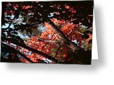 Autumn Red Trees 2015 02 Greeting Card
