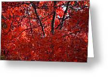 Autumn Red Trees 2015 Greeting Card