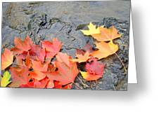Autumn River Landscape Red Fall Leaves Greeting Card