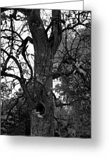 Autumn Spook In Black And White Greeting Card