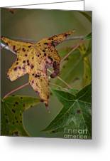 Autumn Spotted Greeting Card
