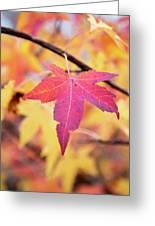 Autumn Still Greeting Card