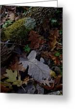 Autumn Still-life Greeting Card
