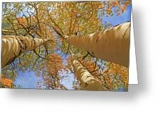 Autumn Straight Up Greeting Card