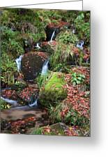 Autumn Stream Greeting Card