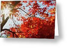Autumn Sun Greeting Card
