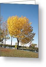 Autumn Sunshine Greeting Card