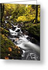 Autumn Swirl Greeting Card