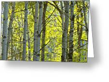 Autumn Through The Trees Greeting Card