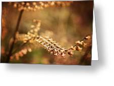 Autumn Tones Greeting Card