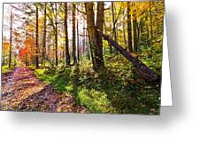 Autumn Trail Greeting Card by Debra and Dave Vanderlaan