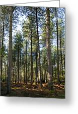 Autumn Tranquil Forest Greeting Card
