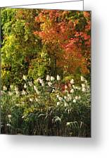 Autumn Tranquility 3 Greeting Card