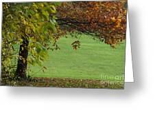 Autumn Tree 1 Greeting Card