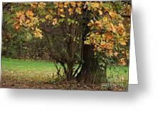 Autumn Tree 2 Greeting Card