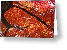 Autumn Tree Art Prints Orange Red Leaves Baslee Troutman Greeting Card
